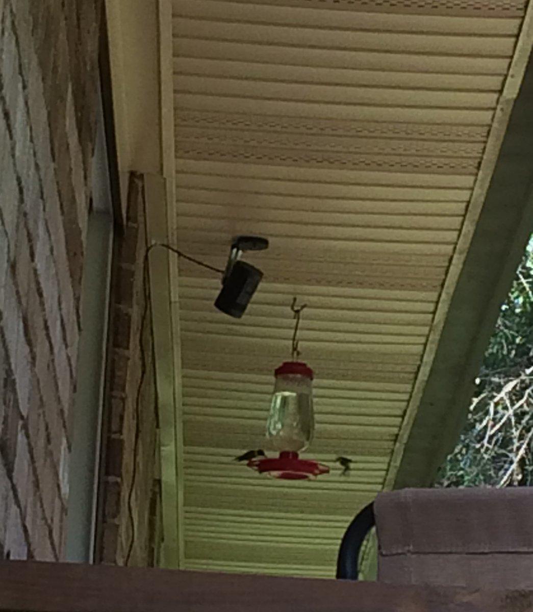 2 hummers.jpg