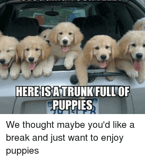 angry-political-posts-clogging-your-feed-l-here-isattrunkfullof-puppies-7421125-.jpg