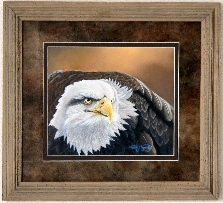 Bald Eagle Prescot.JPG
