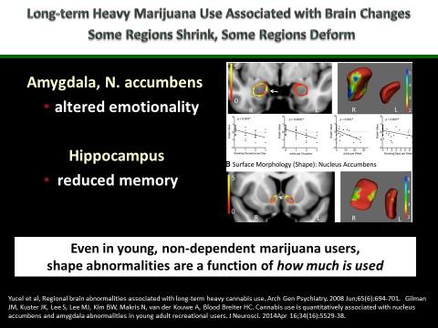 Bertha Madras Presentation - Amygdala & Hippocampus.jpg
