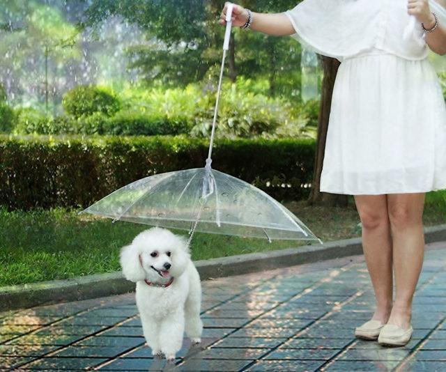 dog-umbrella-leash-lesypet-640x534_1024x1024.jpg