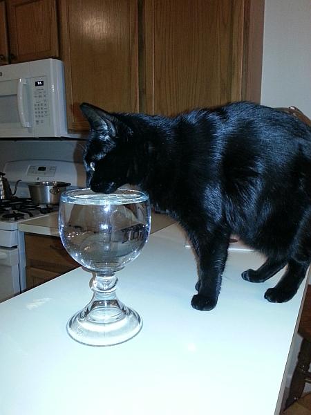 kitty mug gt.jpg