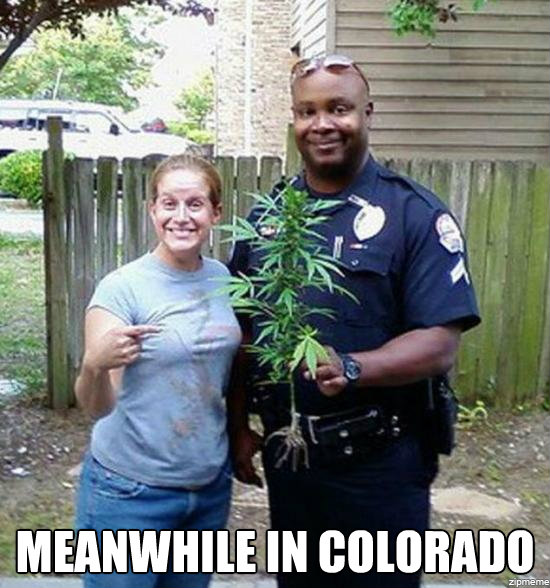meanwhile-in-colorado-weed.jpg