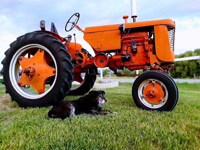 my_dog_my_tractor.jpg