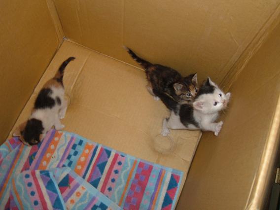 Rescue Kittens 2 .jpg