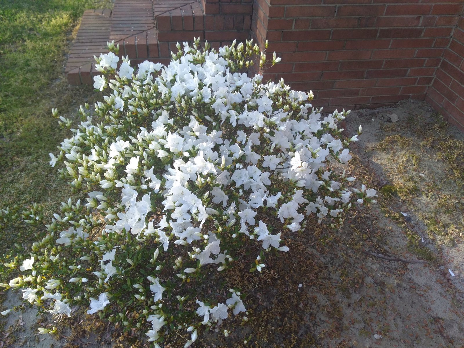 yard bloom.jpg