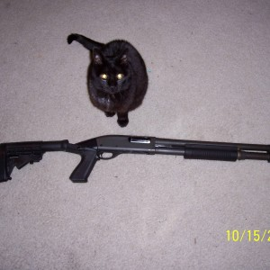 Remington 870 w/ Knoxx Spec-ops with trained guard cat